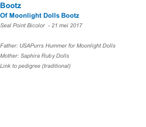 Bootz Of Moonlight Dolls Bootz  Seal Point Bicolor  - 21 mei 2017  Father: USAPurrs Hummer for Moonlight Dolls Mother: Saphira Ruby Dolls Link to pedigree (traditional)
